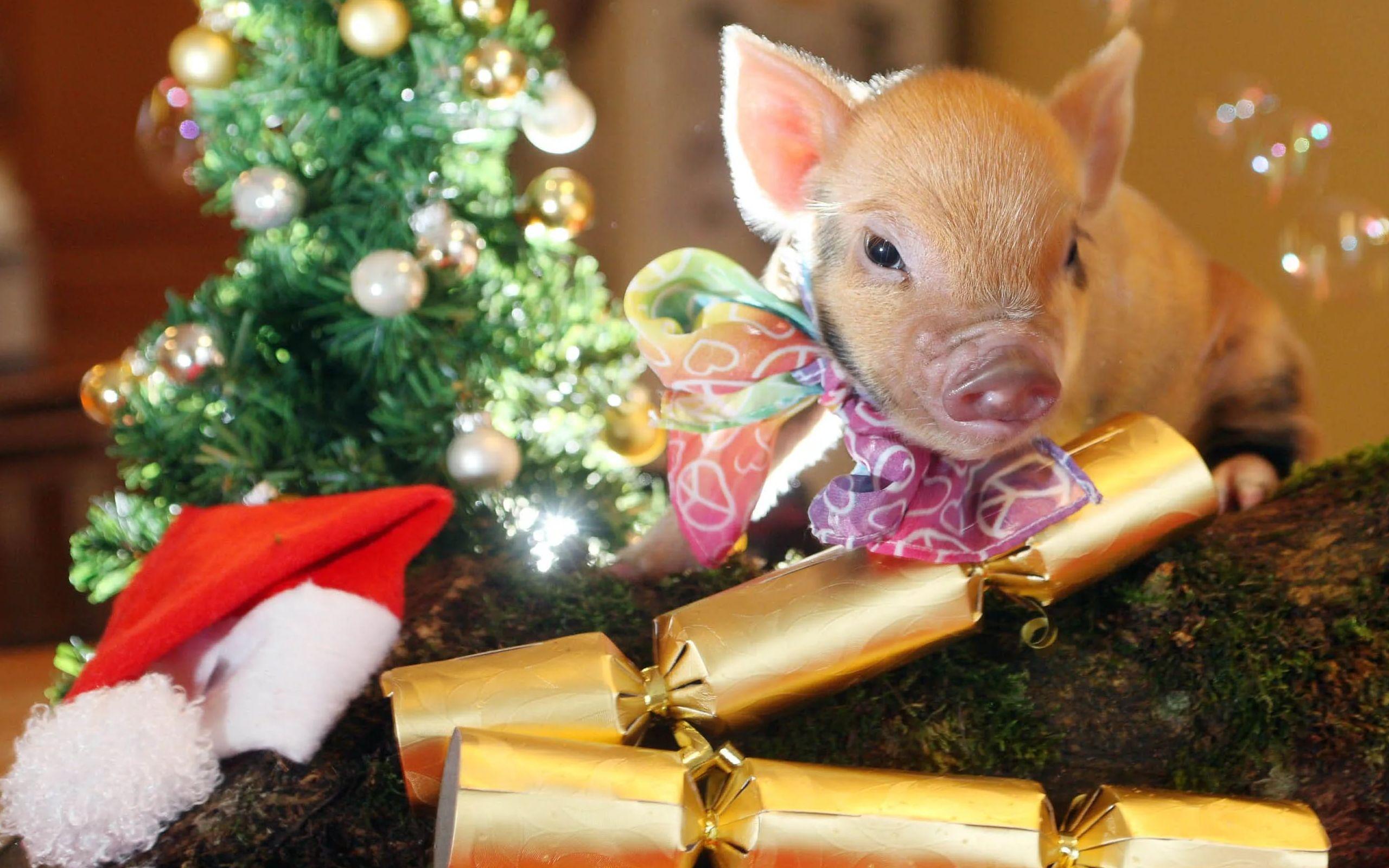 новогодние обои 2019 со свинкой на рабочий стол